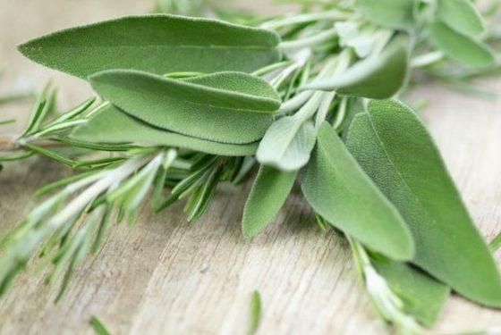 dieta in menopausa erbe aromatiche